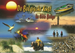 België Belgique / Mouette Meeuw Seagull Möwe / Cheval Paard Horse Pferd / Phare Vuurtoren Lighthouse - Animaux & Faune