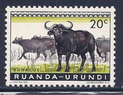 Ruanda-Urundi, Scott # 138 Mint Hinged Cape Buffalos, 1959 - 1948-61: Mint/hinged