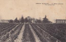 33) La Réole (Gironde)  Domaine De MALBAT . Prix Cultural 1912 - (vigne) - La Réole