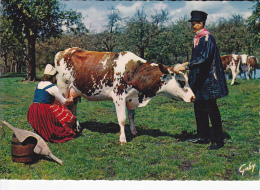 NORMANDIE Fermière Et Son Joug, La Traite, Groupe De Pont -D´Ouilly (14), Blaudes Et Coëffes, Seau, Vaches, Pommiers - Costumes