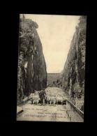 14 - THURY-HARCOURT - Moutons - Thury Harcourt