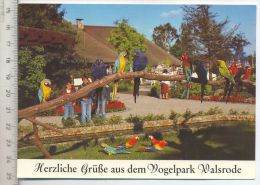 Vogelpark Walsrode – Ara-Freianlage Verlag: Horst Müller, Postkarte,  Erhaltung: I –II Karte Wird In Klarsichthülle Vers - Walsrode