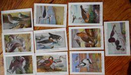 Chromos Fort Oiseaux De Belgique Série 30 Images 291 à 300 - Other