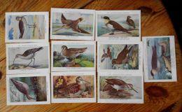 Chromos Fort Oiseaux De Belgique Série 31 Images 301 à 310 - Other