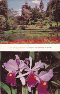 Sri Lanka Ceylon View Of Lake Drive and Orchids in Bloom