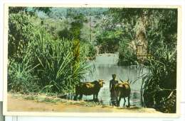 Cambodge Battambang Bord De Rivière à Siem Réap Boeufs Et Bambous - Kambodscha
