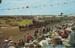 Canada Six Oxen Team Saskatoon's Pion-Era Show Saskatchewan