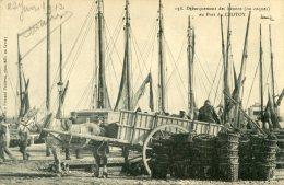Débarquement Des Hénons ( Ou Coques ) Au Port Du  CROTOY - Le Crotoy