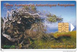 TAAF, TAF-29, Phylica, 2 Scans. - TAAF - French Southern And Antarctic Lands