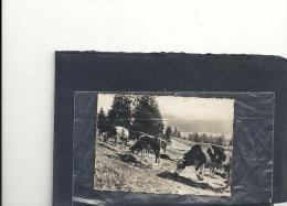 PHOTO--8,5x6 Cm---FRANCHE-COMTE--SOURCE DU LIZON--LES PATURAGES-- - Vieux Papiers