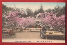 ASI-008 Kyoto Cherry-blossom At Omuro Non Circulated - Kyoto