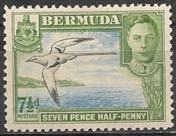 Bermuda/Bermudes: Fetonte, Phaéton, Phaethon - Albatrosse & Sturmvögel