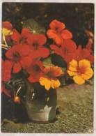 Kapuzinerkresse , Wilhelm Schacht - Fleurs