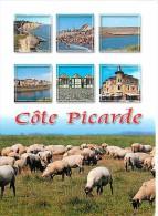 80 - Somme - Cote Picarde - Multivues - Moutons - Voir Scans Recto-Verso - Frankreich