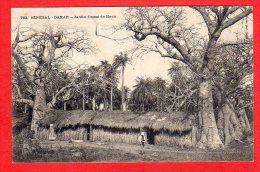 CPA: Sénégal - Dakar - Jardin D'essai De Hann   (Editeur Fortier N°763) - Senegal