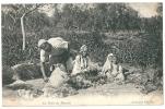 Cpa: ALGERIE La Tonte Des Moutons (Métier) 1904 ND N° 280 - Algérie