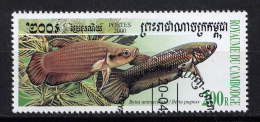 CAMBODGE - N° 1719° - BETTA UNIMACULATA - Cambodge