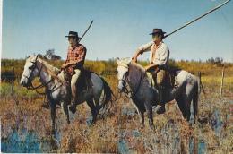 EN CAMARGUE LES GARDIANS SURVEILLENT LES TROUPEAUX - Pferde