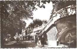 Dépt 63 - CHÂTELGUYON - (CPSM 8.8x13.9cm) - Les Allées Ombragées Du Parc (Châtel-Guyon) - Châtel-Guyon