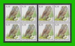 BUZIN - 3624** Chouette De Tengmalm / Ruigpootuil - Nuance Couleurs - 1985-.. Pájaros (Buzin)