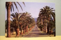 HYERES  - Avenue  Alexis- Godillot - Hyeres