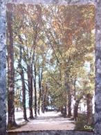 CLAIRVAUX LES LACS (39) LE PARTERRE  . ANNEE 1973 - Clairvaux Les Lacs