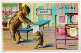 Bears Ironing - Tuesday - Bears