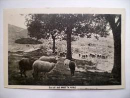 Italie / Italia - Saluti Dal Mottarone - Plan Inhabituel Avec Moutons / Vista Insolita Con Pecore - (n°1247) - Autres Villes