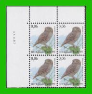 BUZIN - 3672** Chouette Chevêche / Steenuil - 1-III-07 - 1985-.. Birds (Buzin)