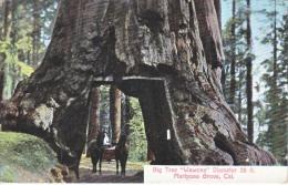 U.S.  HORSE  And  BUGGY   BIG  TREE,  YOSEMITE,  CALIF.  Used  R.P.O.  1910 - USA National Parks