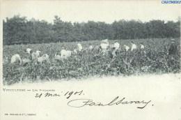 VITICULTURE PES DE LA ROCHELLE LES VENDANGE VIGNES  METIER AGRICULTURE CHARENTE-MARITIME 1900 - Francia
