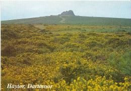 Devon Postcard - Haytor, Dartmoor   LSL1862 - Autres