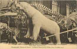 Dépts  Divers - Monaco - Ref H401-monte-carlo-musée Océanographique  ( Ours Blanc )  Carte Bon état - - Musée Océanographique