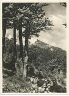 Photo Originale Format 22.5 X 16.5 Cms ) DER JESCHKEN 1010 M Bei REICHENBERG Sudetengau (Tchéquie  Liberec) - Lieux