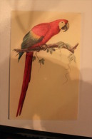 Carte Illustrateur - ARA ARACANGA - Birds