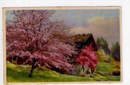 CPA/AD627/PAYSAGE DE CAMPAGNE ARBRES EN FLEURS - Fleurs, Plantes & Arbres