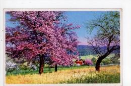 CPA/AD629/PAYSAGE DE CAMPAGNE ARBRES EN FLEURS - Flores, Plantas & Arboles