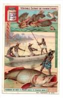 Chromo Liebig, Poisson De Mer, Pêcheur - Liebig