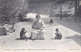 Aj - Belle Cpa BLIDA - Gorges De La Chiffa - Hôtel Du Ruisseau Des Singes - De Bons Amis - Blida