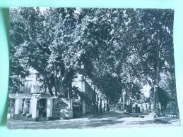 LAMALOU LES BAINS - L'Avenue CHARCOT - Lamalou Les Bains