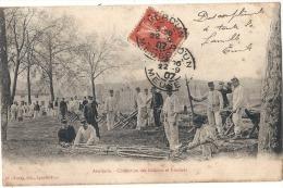 Militaria - Artillerie - Confection Des Gabions Et Fascines  - Petit Manque De Fraicheur 1907 - Manoeuvres
