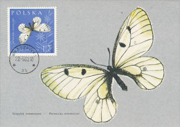 D14252 CARTE MAXIMUM CARD 1963 POLAND - BUTTERFLY PARNASSIUS MNEMOSYNE CP ORIGINAL - Vlinders
