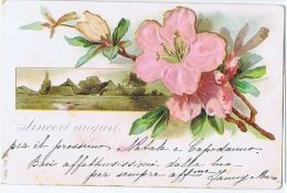 1900s EMBOSSED POSTCARD - FLOWER - 16 - Illustrateurs & Photographes