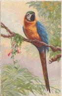 KLEIN C. (Catharina)(non-signee, Annonyme) -12- Peroquet, Papegaai,papagayo, Parrot, Papagei - Klein, Catharina