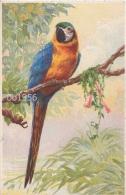 KLEIN C. (Catharina)(non-signee, Annonyme) -13- Peroquet, Papegaai,papagayo, Parrot, Papagei - Klein, Catharina