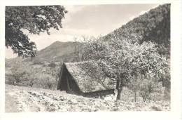 SLOVENIA - Okolina Celja 1963 - Slovénie