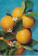 España--Valencia--1964---Naranjas Con Flor De Azahar-- - Flores