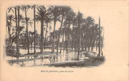 Le Caire - Bois De Palmiers, Près Du Caire - Le Caire