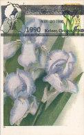 D14312 CARTE MAXIMUM CARD RR TRIPLE1990 USA - IRISES CP ORIGINAL - Plants