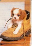 CALENDARIO DEL AÑO 2002 DE UN PERRO (CAN-DOG-PERRO) (CALENDRIER-CALENDAR) - Calendarios